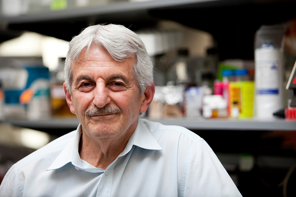 Scientists need to determine how long immunity will last after infection versus immunization, says distinguished professor of microbiology and infectious diseases Saul Tzipori. (Photo by Kelvin Ma/Tufts University)