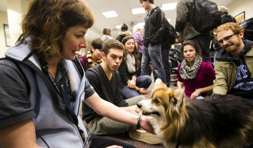 Veterinary Clinical Studies Provide Hope for Pet Owners