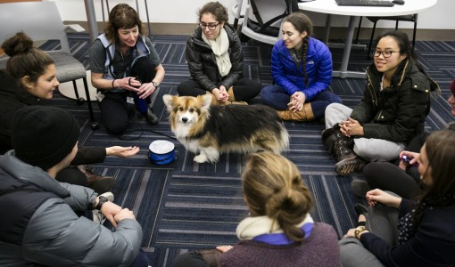 Clinical Studies Provide Hope for Pet Owners