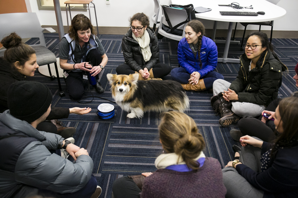 12/13/2013 - Medford/Somerville, Mass. - Lisa Freeman, Professor of Clinical Sciences at the Tufts Cummings School of Veterinary Medicine, brought her dog to help students take a study break at Tisch Library on December 13, 2013.  (Alonso Nichols/Tufts University)