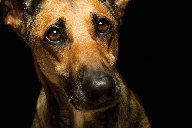 Clinical Case Challenge: Cervical Abscess in a Dog