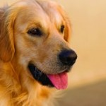 151217_retriever_cancer_genetics_S.jpg