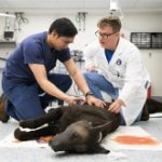 190717_military_working_dogs_vet_help_s