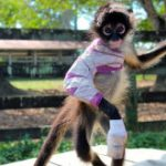 190916_spider_monkey_izzie_s