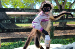 Image for Spider Monkey Mission