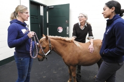Image for Testing a New Therapy for Horses Struggling to Breathe