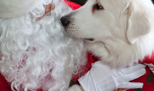 Gifts for your pet this holiday season