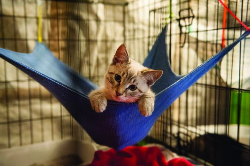 kitten laying in a pet hammock with paws hanging over the side and looking out