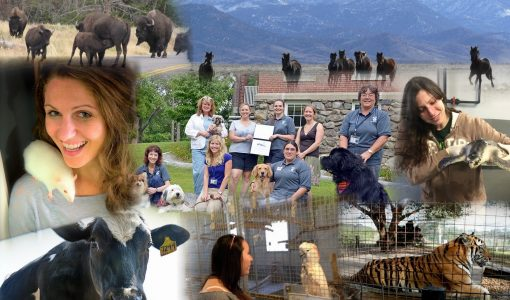 Summer Short Course:  Animals and Society