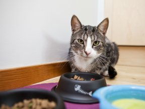 What Appetite Changes Can Mean on Cats