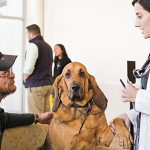 12/15/2016 - Grafton, Mass. - (at right) Alexis Pellegrino, a fourth-year Ross University student on an oncology rotation, meets Jeff Doyle and Butter, his eight-year-old bloodhound, in the lobby at the Foster Hospital for Small Animals on December 15, 2016. Jeff drove down from Vermont to bring Butter to her appointment and expected to wait for about four hours before going home. The Cummings School of Veterinary Medicine recently completed an expansion and renovation of the lobby, examination rooms and areas of the ER at the on-campus hospital. (Alonso Nichols/Tufts University)