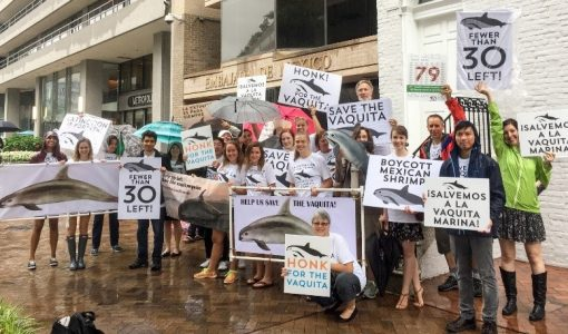 Fighting for the Endangered Species Act in Washington: My Summer with the Animal Welfare Institute