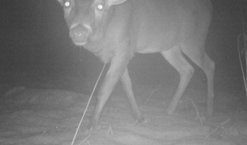 MCM'19 Camera Trap Photos