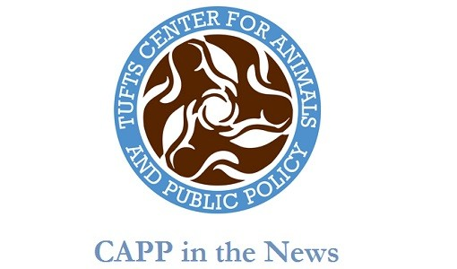 Survey on 'Bear Conflicts' in Teton County: Interview with Pietro Castelli, MAPP '17