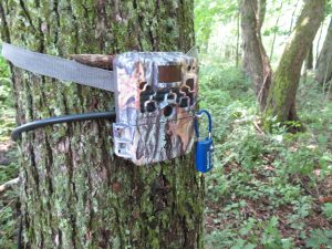 One of the camera traps tied to a tree at Tufts University's Cummings School of Veterinary Medicine--a digital, battery-operated model capable of taking hundreds of photos.