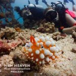 Carey-New Heaven Reef Conservation Program