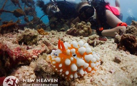 Coral reef ecology, research, and restoration in Thailand