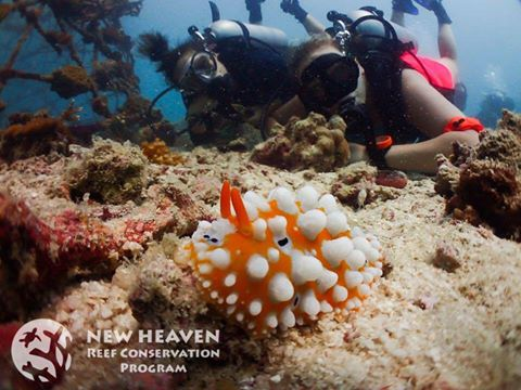 Ensuring a Future for Coral Reefs in the Gulf of Thailand