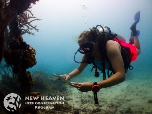 Cheyenne Carey athe the Hin Fai site. Photo by New Heaven Reef Conservation.