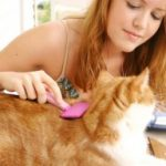 Even a fastidious cat can sometimes use extra help with his regular grooming, especially as age-related physical changes set in.