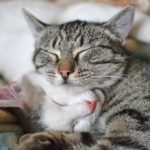 © Hannadarzy | Dreamstime.com  Cats can greatly suffer the loss of a companion — whether it be feline or human. It's important to find ways to help ease your pet's grief.