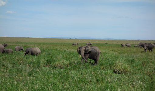 """Tufts talk on elephant poaching: """"Conservation has to 'pay to play'"""""""