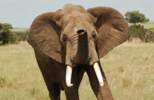 Combating Poaching and  Solving Human-Elephant Conflicts in the Maasai-Mara