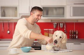Unwholesome Ingredients In Your Dog's Food?
