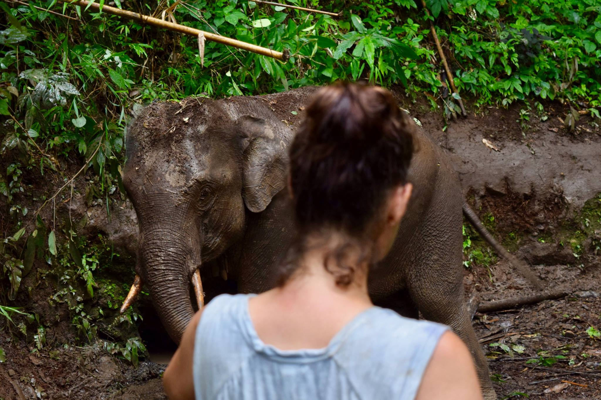 Dr Liv Baker with Asian elephant during rescue