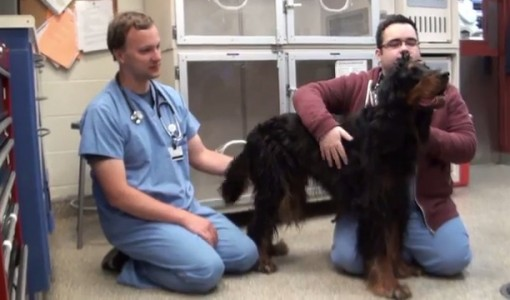 How to know when to bring your family pet to the ER