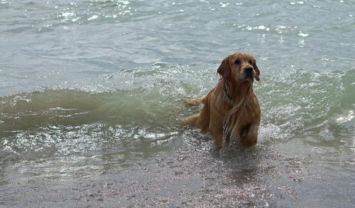 Dear Doctor: Dogs Gotta Swim…But Should They Be Bathed Afterward?
