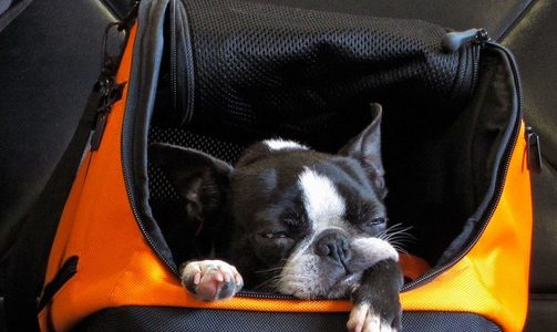 How to Get Your Dog to Stop Barking on Planes