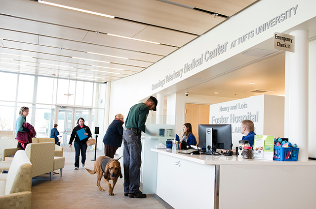 Small animal hospital at Cummings Veterinary Medical Center at Tufts University receives referral accreditation for 15 specialties