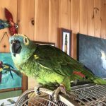 Foster Parrots - The New England Exotic Wildlife Sanctuary