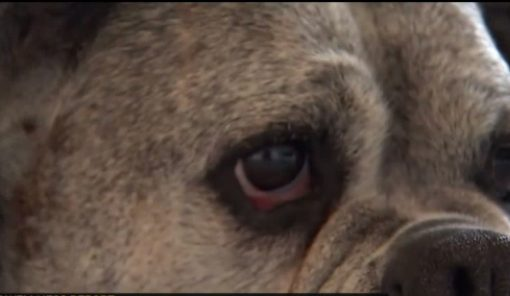 ALS Treatment for Dogs Could Benefit Human Patients