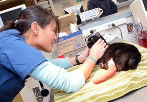 In Case of an Emergency: Veterinary Basics for First Responders