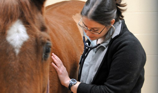 Protecting horses from Equine Herpesvirus type 1 associated myeloencephalopathy (EHM)