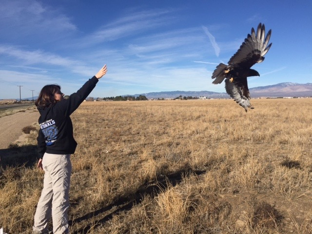 Searching for Southern California's Birds of Prey