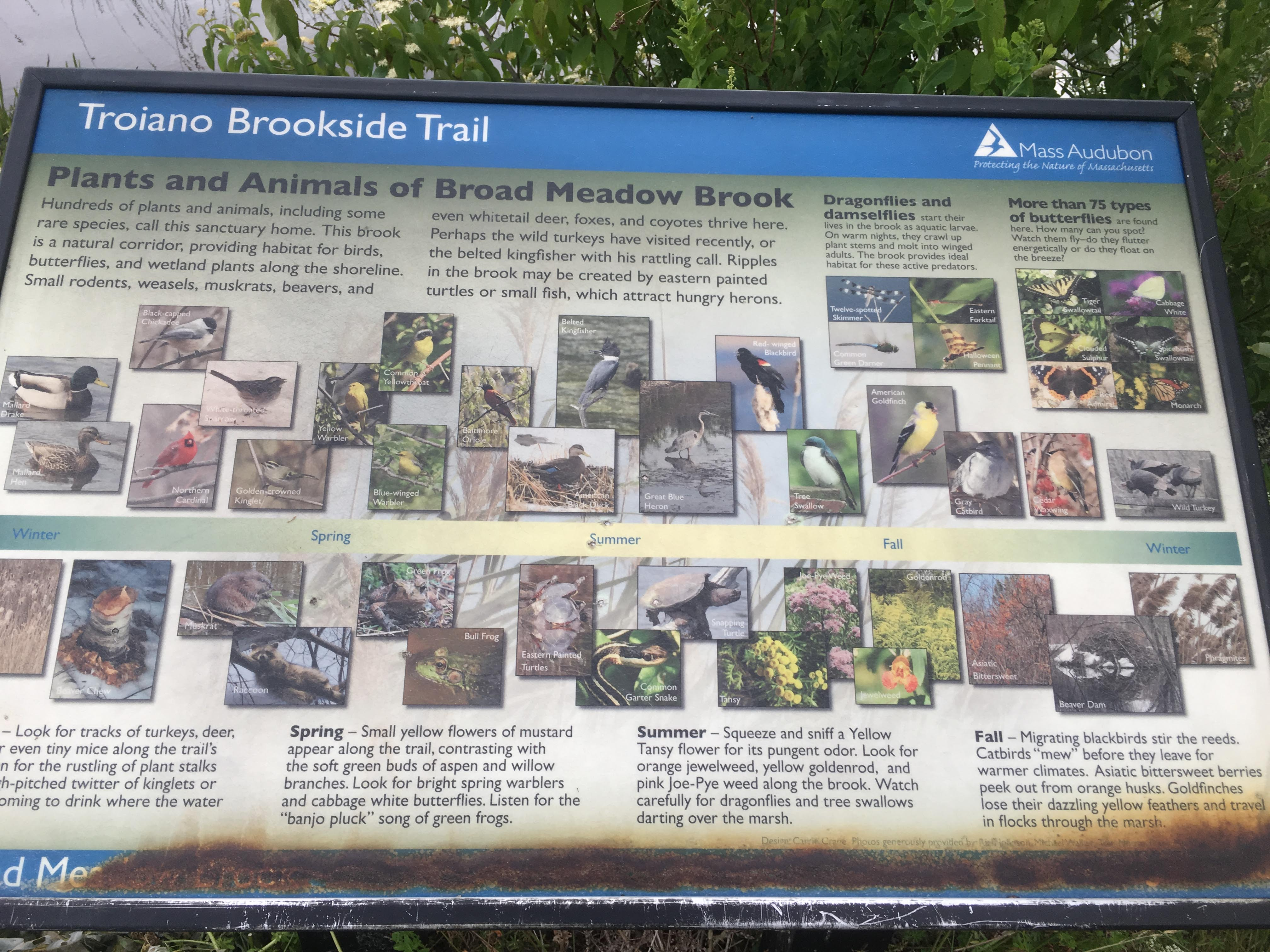 Summer Short Course: Animals and Society 2018 - Beaver dam at Broad Meadow Brook Conservation Center and Wildlife Sanctuary in Worcester, MA