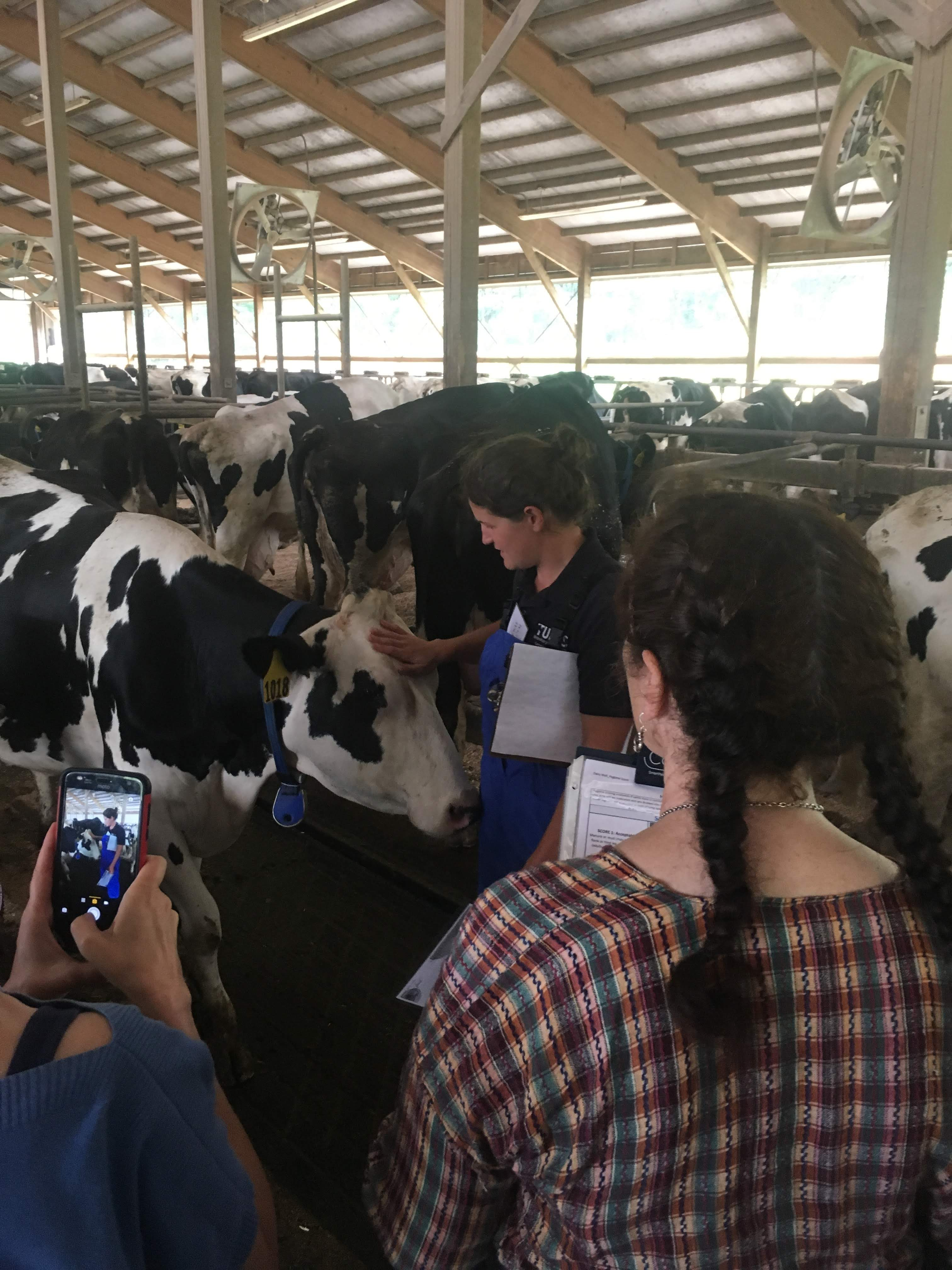 Summer Short Course: Animals and Society 2018 - Dr. Philips talking to the class. The cows approached her and seem curious, too.