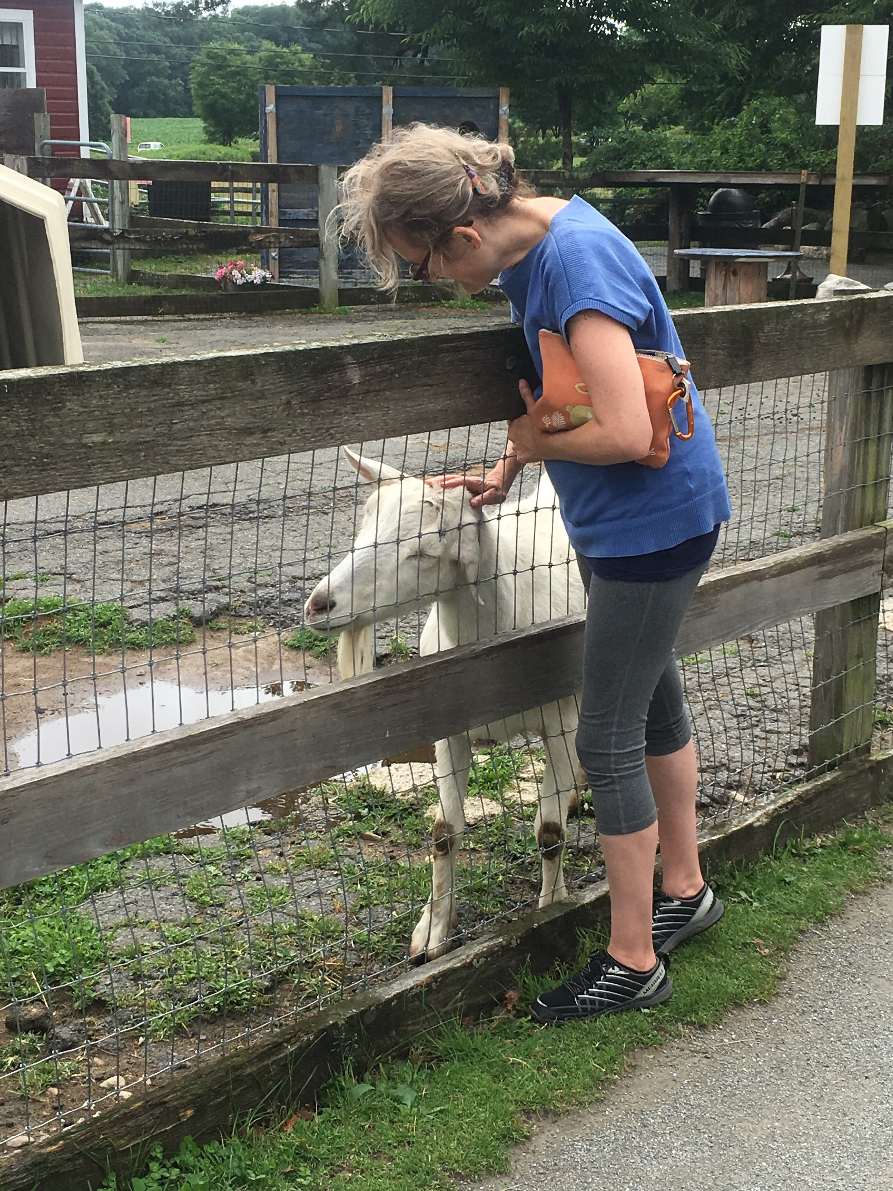 Summer Short Course: Animals and Society 2018 - meeting a goat after leaving the barn.
