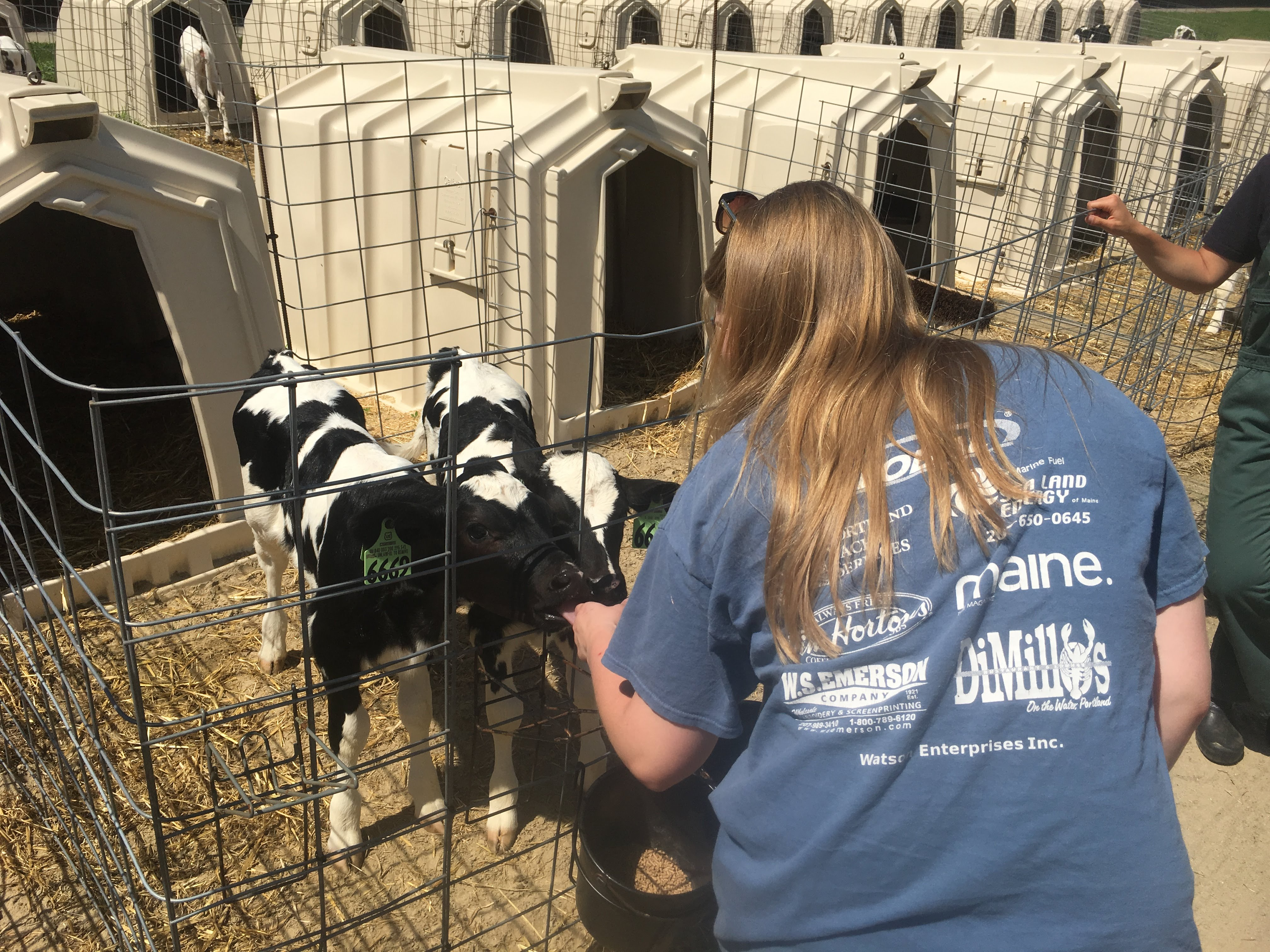 Farm Visit: Tour and Mock Welfare Assessment with Drs. Lindsay Philips and Erin King. You may notice two calves in one enclosure. The farm is trying this newer method out for calves at this age to see if they can implement it for more or all calves at this stage.