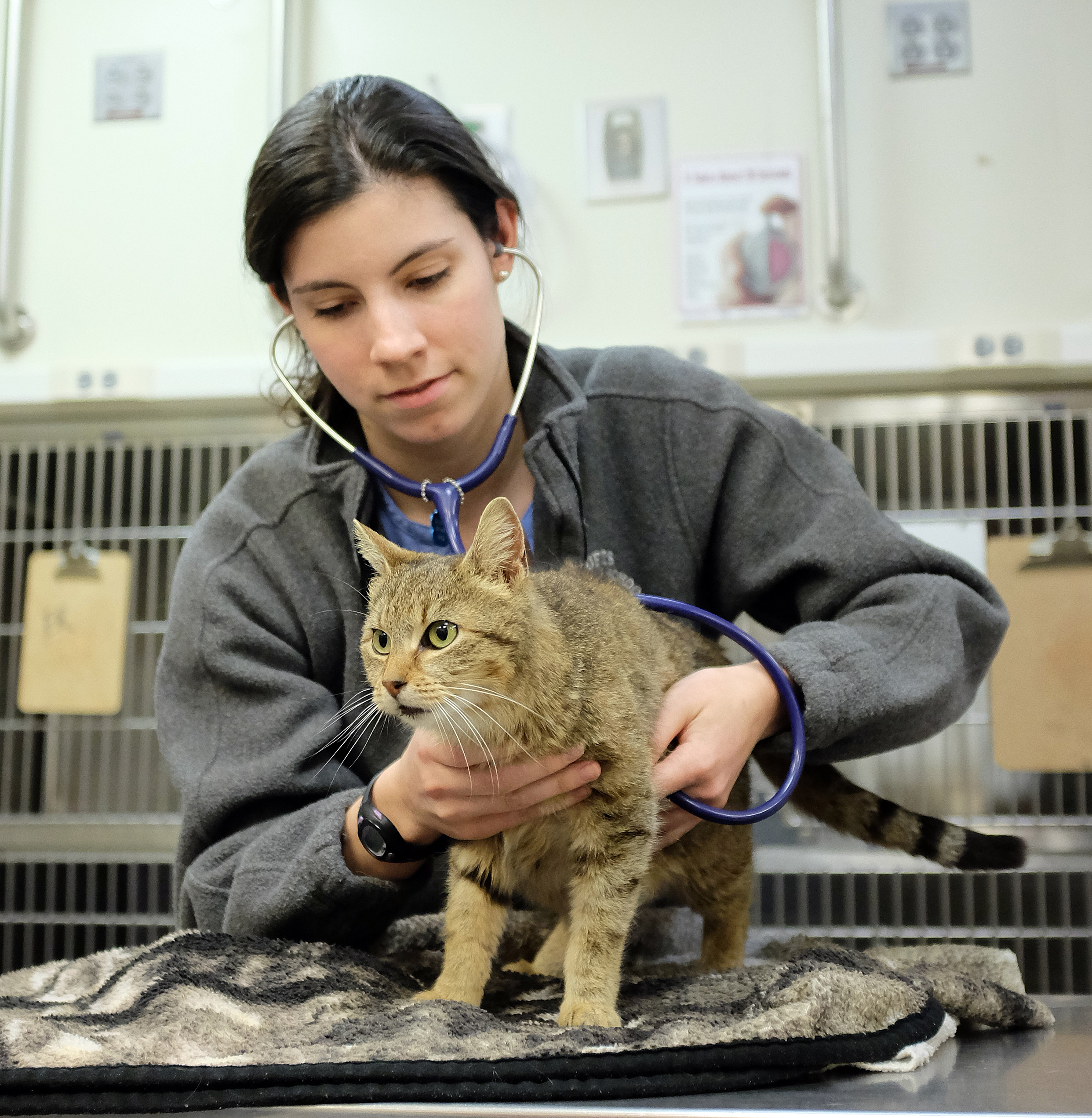 Administration of Pimobendan to Cats with Chronic Kidney Disease (CKD)