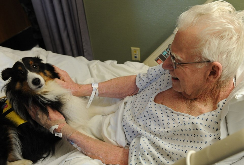 Survey: Can Therapy Animal Visits Pose Risk to Patients?