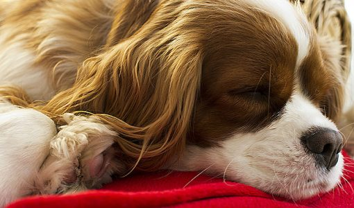 Dear Doctor: Let Dreaming Dogs Lie