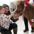 Therapy Horse Gets the Best Treatment so She Can Give Her Best