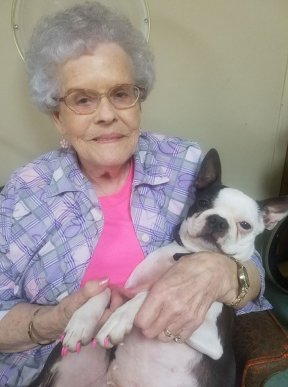 """Precious"" is a Boston terrier who spends time at the Pine Grove Nursing Center, even allowing the residents to paint her toenails!"