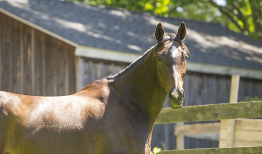 Mysterious Lameness No Match for Lucy Thanks to the Help of Tufts Team