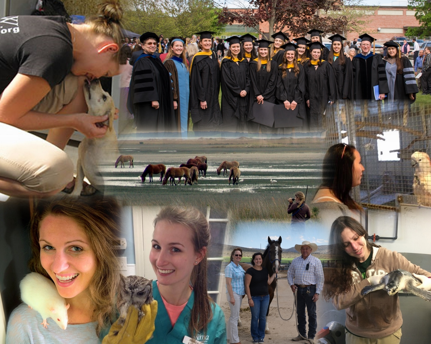 MS in Animals and Public Policy Program OPEN HOUSE 2020