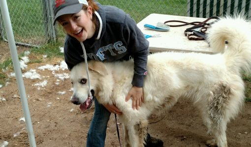 Austin Pets Alive!: Applying Individualized Behavior Modification for Shelter Dogs